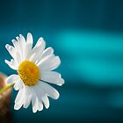 Daisy and Blue by KellyHeaton
