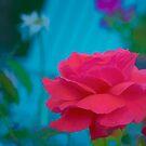 Rose Garden by KellyHeaton