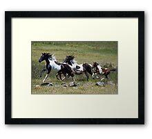Oxley Brumbies Framed Print