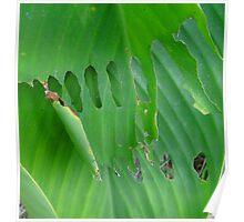 Holey Leaf Poster