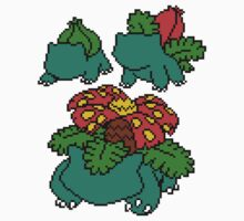Bulbasaur, Ivysaur and Venusaur by Funkymunkey