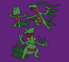 Treecko, Grovyle and Sceptile by Funkymunkey
