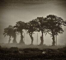 Black trees by GGC62