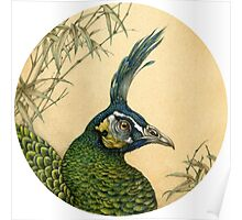 Green Peafowl Head Poster