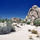 Surreal Joshua Tree by Dan Bronish