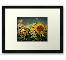 Grungy Sunflowers Framed Print