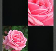 Pink Roses in Anzures 2 Blank Q2F0 by Christopher Johnson