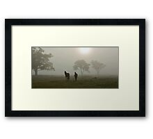 Horses in the Mist - West Ayalong, NSW Framed Print