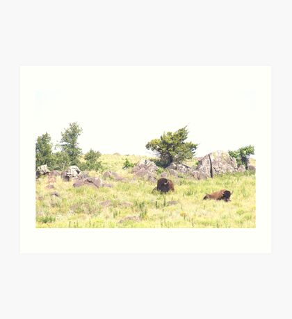 Buffalo Pair Art Print