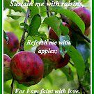 Refreshing Apples by Paula Tohline  Calhoun