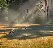Sheep Safely Grazing by Cynthia Harris