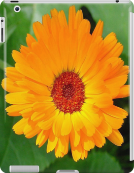 October's Summer Sunlit Marigold by taiche