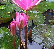 Family Of Lotus by Priyank
