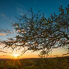 Early Rays by Matt Mason