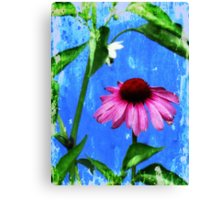Dance of the Vintage Echinacea Flower Canvas Print