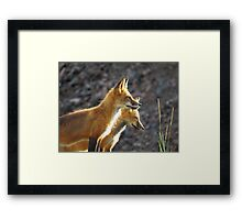 mother and daughter fox survey the scene Framed Print