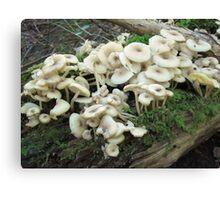 Mushroom Mania Canvas Print