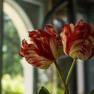 Of Tulips and Garden Windows by Georgia Mizuleva