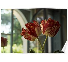 Of Tulips and Garden Windows Poster