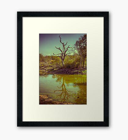 Leadwood Reflection Framed Print