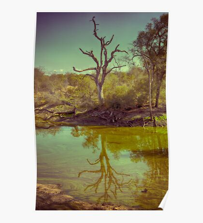 Leadwood Reflection Poster