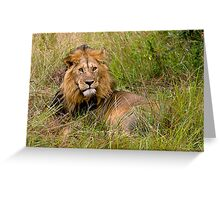 Great lion Greeting Card