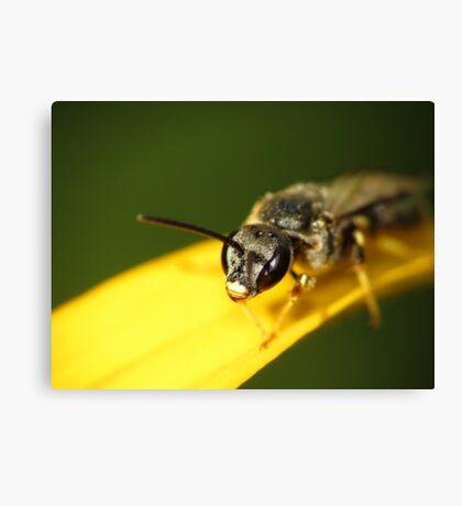 Bee 1 Canvas Print