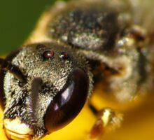 Bee 1 Sticker