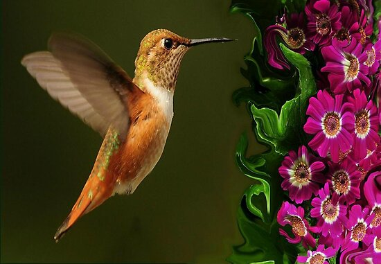 HUMMER DELIGHT~ by RoseMarie747