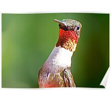 Male Ruby Throated Humming Bird (UP CLOSE) Poster