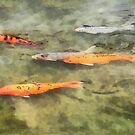 Fish - School of Koi by Susan Savad