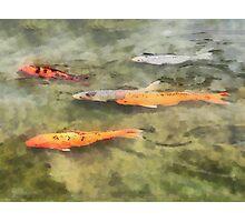 Fish - School of Koi Photographic Print