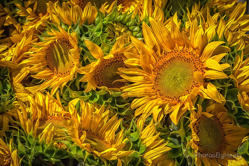 Sun worshippers by PhotosByHealy