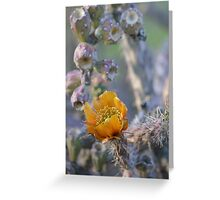 Orange cholla flower Greeting Card