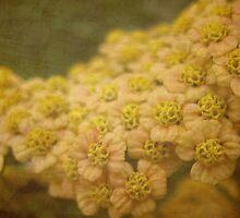 Delicate beauty  by Karen  Betts