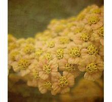 Delicate beauty  Photographic Print
