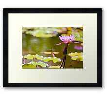Dragonfly with water lilly Framed Print