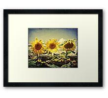 Grungy Sunflowers 3 Framed Print