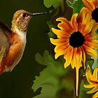 A MONTH OF SALES...HUMMER AND SUNFLOWER SUMMER by RoseMarie747