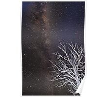 Grace's tree at night Poster