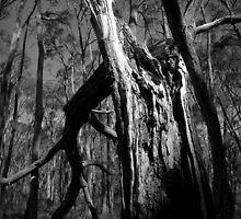 Scary Tree- Wotton Scrub Storm Damage by Ben Loveday