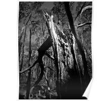 Scary Tree- Wotton Scrub Storm Damage Poster