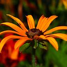 Hello Daisy by Adam Kuehl