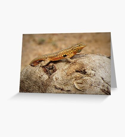 Common Side-blotched Lizard (Male) Greeting Card