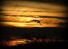 Sunset Sea Shark by Kimberly Chadwick
