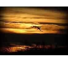 Sunset Sea Shark Photographic Print