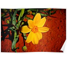 Red Centre Flower Poster