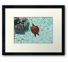 Bora Bora Sea Turtle Framed Print
