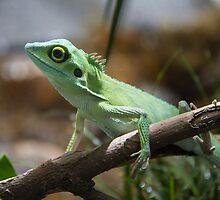 Lizard by Deanna Heitschmidt