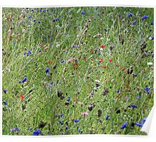Cotswold Wild Flowers Poster